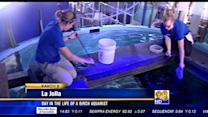 Day in the life of a Birch aquarist
