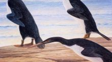 Happy Feet meets T-Rex: Penguins in the age of dinos