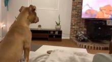 """Dieser Hund findet """"König der Löwen"""" genauso rührend wie wir"""