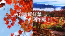 2017賞楓攻略︰去台灣睇紅葉唔怕遲!推介7大熱門追楓景點