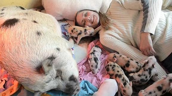 40 Pigs Living In One House?