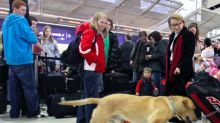 They Had One Job: Airport Sniffer Dogs FAILED To Detect Drugs - But Did Locate Cheese
