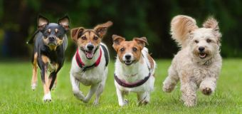 Owning a dog may have serious health benefits
