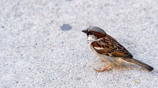City Noise Is Forcing Birds To Sing Off Key