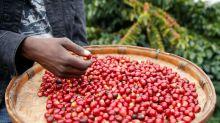 Colheita de café da Cooxupé avança para 92,5% da área e mantém alta ante 2018