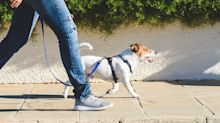 Country's new law could force dog owners to walk for an hour every day