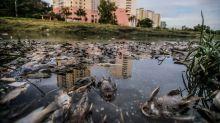 Selangor DoE eyeing possible sources behind pollution that caused fish to die in Sg Damansara