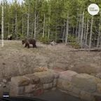 Woman faces charges after video shows bear charging her at Yellowstone National Park