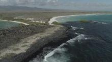 Ciência e turismo precisam se adaptar para sobreviver em Galápagos