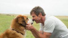 Autor do livro 'Quatro Vidas de Um Cachorro' nega maus-tratos a animais nas filmagens