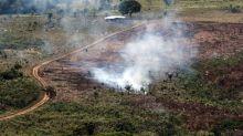 哥倫比亞2019年森林流失面積 相當於巴西聖保羅