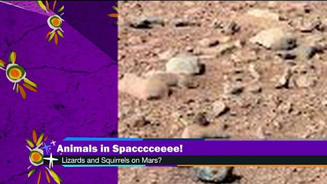 Are Animals Roaming Around On Mars?