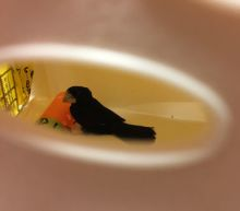 Chirp perp: Finches found in luggage at NY airport