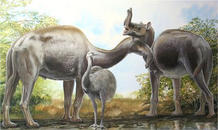 An artist's rendering shows the South American native ungulate Macrauchenia patachonica which had a number of remarkable adaptations, including the positioning of its nostrils high on its head in this illustration released on March 17, 2015. REUTERS/Peter Schouten/Handout