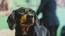 Veterinario confonde telefoni e sopprime cane sbagliato