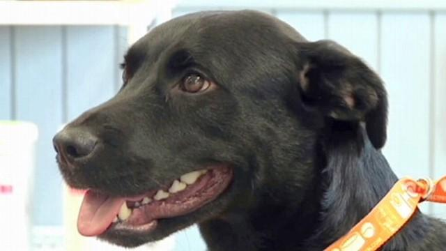 Dog Travels 500 Miles Home to His Owner