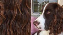Hundehaare als Inspiration für deine Frisuren