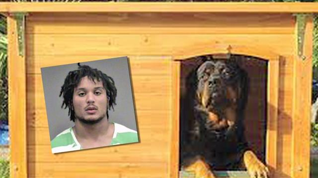 College football player arrested for barking at police K9