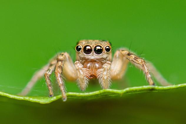 An efficient new depth sensor was inspired by spider eyes