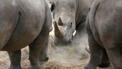 Studie warnt vor Abnahme der biologischen Vielfalt
