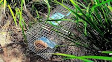 Story behind mysterious traps left in popular Sydney park