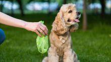 Adiós al plástico de un solo uso, ¿y qué hago con las heces de mi perro?