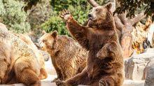 Stock Market Tumbles At Open, Breaks Below Key Levels