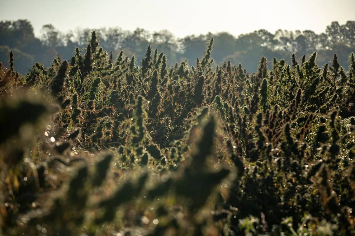 KY hemp group accuses police of illegal store raids, files lawsuit to stop them