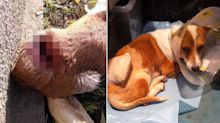Dog who was almost cut in half with sword makes remarkable recovery – and finds new home