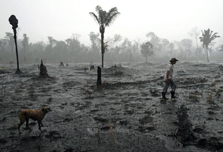 Brazilian farmer Helio Lombardo Do Santos walks through a burned area of the Amazon rainforest near Porto Velho, Rondonia state on August 26, 2019 (AFP Photo/CARL DE SOUZA)