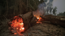 The Amazon rainforest is burning — here's how you can help save it