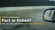 Das Hai-Foto, das während Unwettern immer wieder auftaucht, ist ein Fake