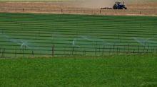 Buy Jain Irrigation Systems, target Rs 123: Dinesh Rohira