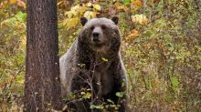 Messy camp at national park lures bear and earns Idaho woman $5,800 fine, judge rules