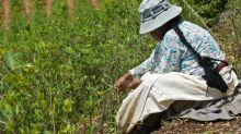 'There'll be war' if Bolivia cuts coca growing, farmers warn