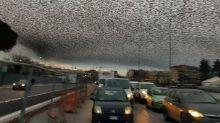 Como en una película de terror, millones de pájaros oscurecieron el cielo de Roma