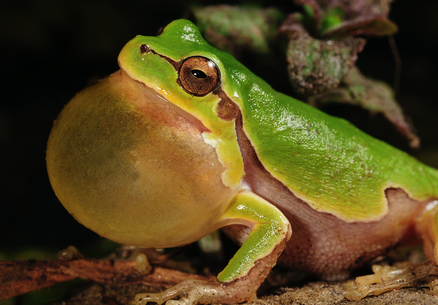 The ballooning US debt is like 'the boiling frog'