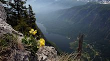 A wildflower explosion in deepest Slovenia