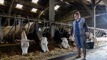 Municipales: pourquoi les agriculteurs se désengagent?