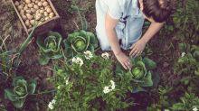 The rise of vegan gardening