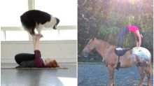 Beer, Goat and Dogs: The Bizarre Avatars of Yoga to Try This International Yoga Day