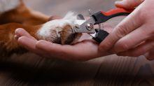 Krallen schneiden: Diesen Trick sollten Hundebesitzer kennen