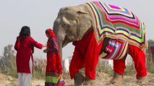 These elephants have their very own giant jumpers to keep them warm in winter