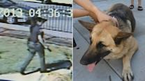 Family dog shot in yard by El Monte police officer