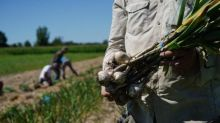 West Island high school's garlic crop stolen