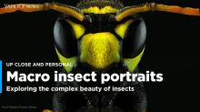 Stunning macro portrait images bring out the symmetrical beauty of the faces of insects