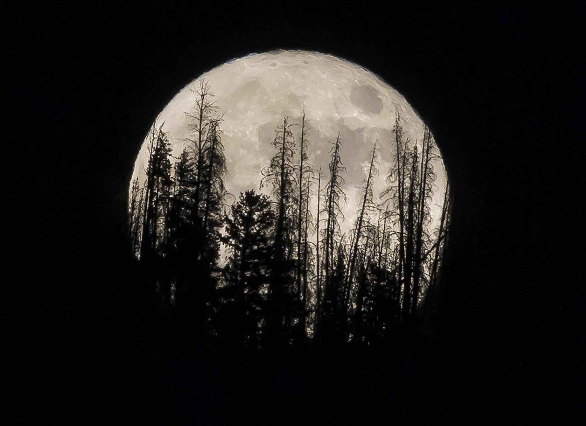 <p>Evergreen trees are silhouetted on the mountain top as a supermoon rises over over the Dark Sky Community of Summit Sky Ranch in Silverthorne, Colo., Monday, Nov. 14, 2016. (AP Photo/Jack Dempsey) </p>