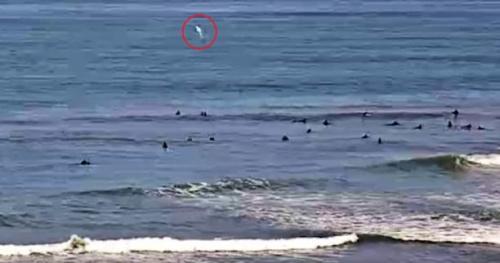 Surf - En Californie, un requin remarqué sur une webcam près des surfeurs