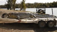 Hunt for killer after 'iconic' 17-foot crocodile is killed by a shot in the head