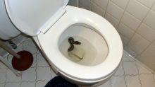 Man bitten on genitals by snake hiding in toilet bowl